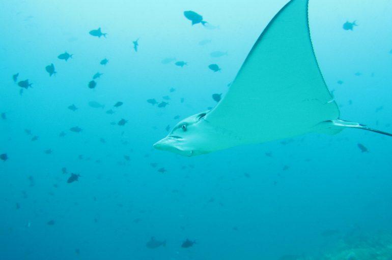 Nardymo safaris Maldyvuose